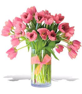 Precious-Pink-Tulips-Premium